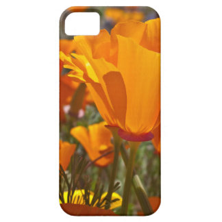 Bright orange california poppies iPhone 5 covers
