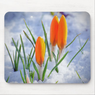 Bright Orange Fresh Spring Flower Buds in Snow Mouse Pad
