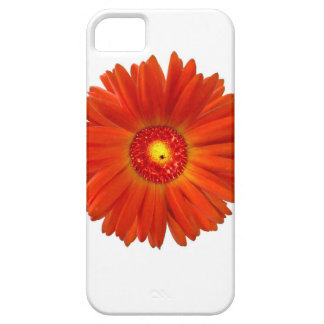 Bright Orange Gerbera Daisy Case For The iPhone 5