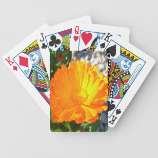 Bright Orange Marigold In Bright Sunlight Bicycle Playing Cards