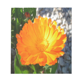 Bright Orange Marigold In Bright Sunlight Notepad