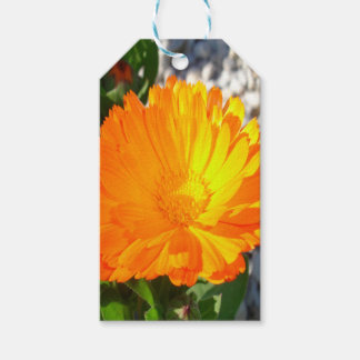 Bright Orange Marigold In Bright Sunlight Pack Of Gift Tags