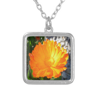 Bright Orange Marigold In Bright Sunlight Silver Plated Necklace