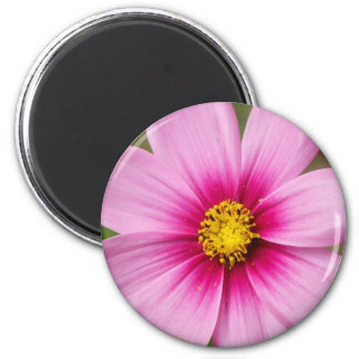 bright pink daisy magnet