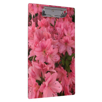 Bright pink flowering bush in the spring clipboard