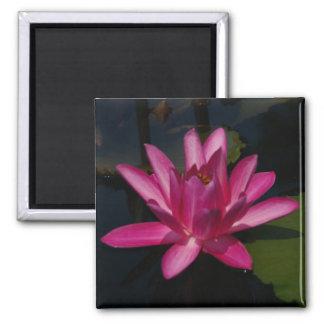 Bright Pink Lotus Waterlily magnet