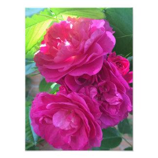 Bright pink roses photo print