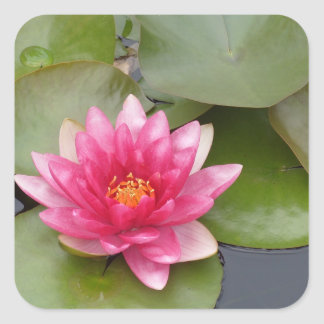 Bright Pink Water Lily Flower Square Sticker