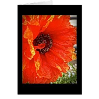 Bright Poppy Blank Note Card