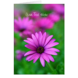Bright Purple African Daisy flower blank card