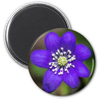Bright Purple Colorful  Flower Floral Magnet
