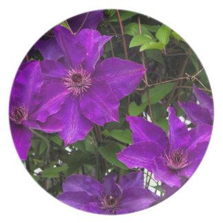 Bright Purple Jackmanii Clematis Vine Dinner Plates