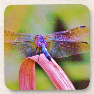Bright Rainbow Pink Dragonfly Coasters