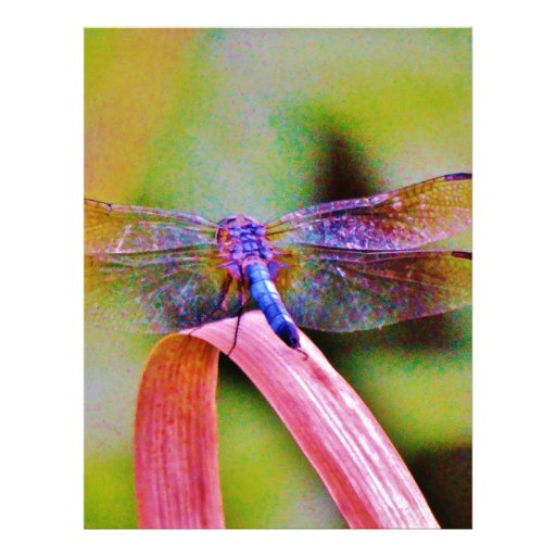 Bright Rainbow Pink Dragonfly Personalized Letterhead