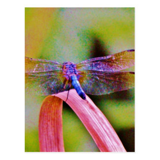 Bright Rainbow Pink Dragonfly Post Cards