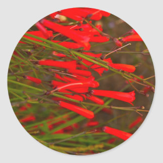 Bright Red Flower Stickers