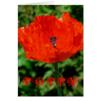 BRIGHT RED POPPY CARD
