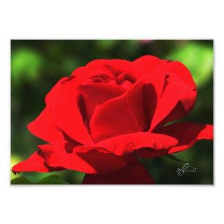 Bright Red Rose Photo Print