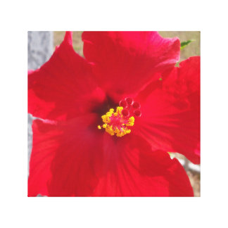bright red tropical hibiscus flower canvas print