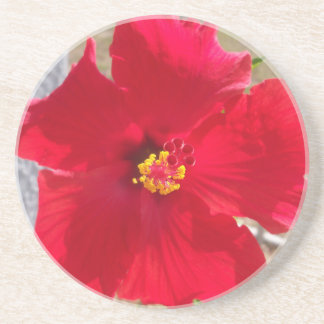 bright red tropical hibiscus flower coaster