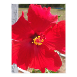 bright red tropical hibiscus flower letterhead