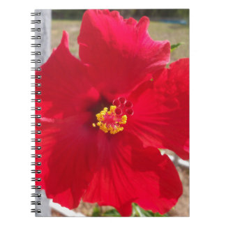 bright red tropical hibiscus flower notebooks