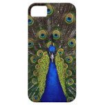 Bright regal peacock photo bird nature print case for the iPhone 5