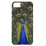 Bright regal peacock photo bird nature print cover for iPhone 5C