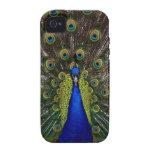 Bright regal peacock photo iphone 4S skin