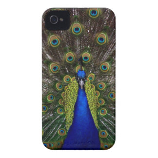 Bright regal peacock photo iphone 4S skin iPhone 4 Case