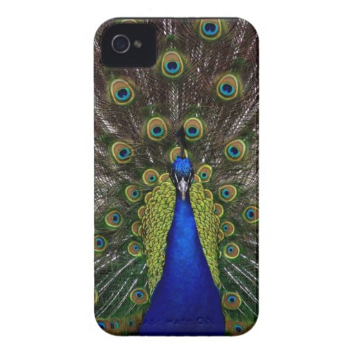 Bright regal peacock photo iphone 4S skin iPhone 4 Cases