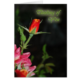 Bright Rose Sympathy Card