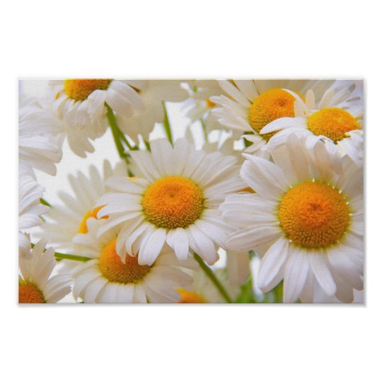 Bright Summer Daisies Poster