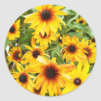 Bright Yellow Black Eyed Susans Round Sticker