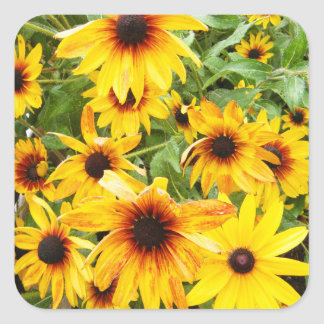 Bright Yellow Black Eyed Susans Square Sticker