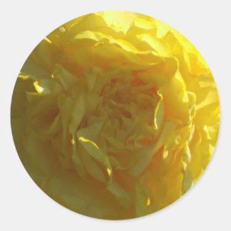 Bright Yellow Peony Peonies Flower Sticker