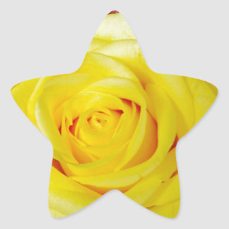 Bright Yellow Rose Stickers