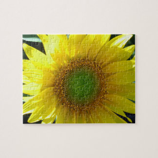 Bright Yellow Sunflower Puzzles