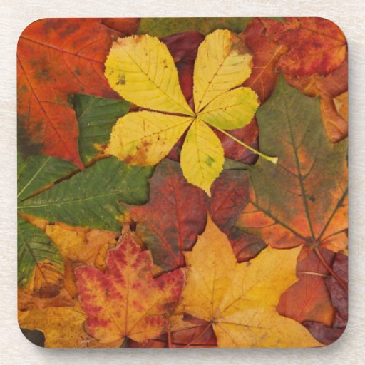 Brightly Colored Fall Leaves Coasters