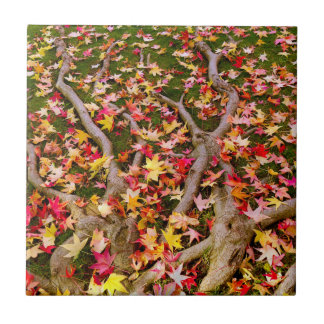 Brightly Colorful Maple Leaves Tiles