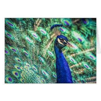Brilliance in Blue & Green Peacock Greeting Card