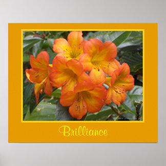 Brilliance Zen Meditation Orange Flowers Photo Poster