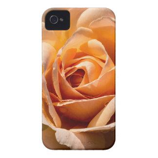 Brilliant Blossom 2 iPhone 4 Cases