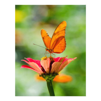 Brilliant Butterfly on Bright Orange Gerber Daisy Letterhead
