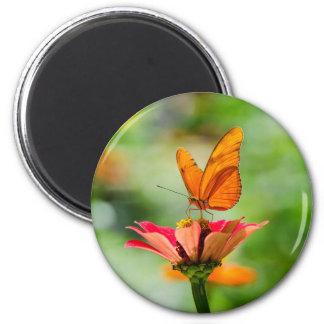 Brilliant Butterfly on Bright Orange Gerber Daisy Magnet