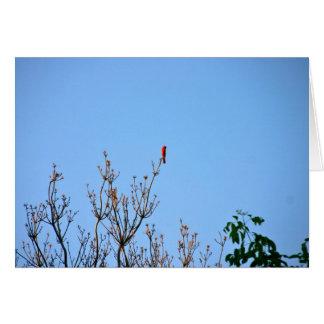 Brilliant Cardinal card