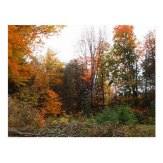 Brilliant Early Morning Autumn Colours Postcard
