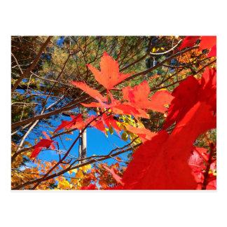 Brilliant Foliage Postcard