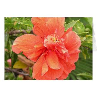 Brilliant Orange Hibiscus Card