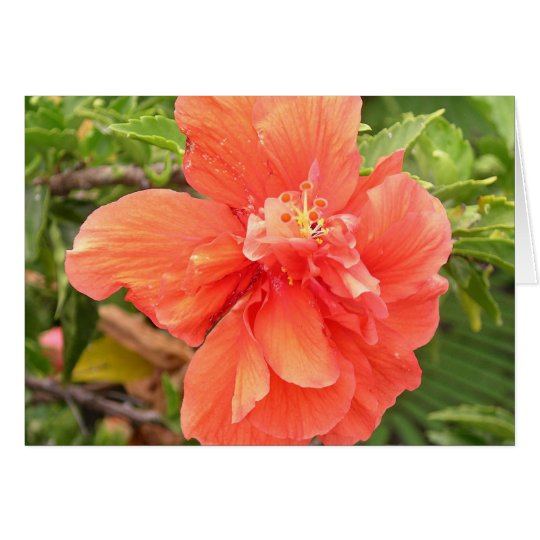 Brilliant Orange Hibiscus Card